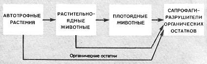 Рис.1. Общая схема пищевой цепи по 7.